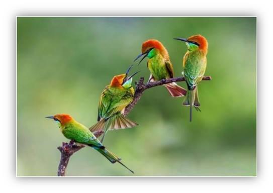 """""""No tengan miedo, porque ustedes valen mucho más que todos los pájaros del mundo."""""""