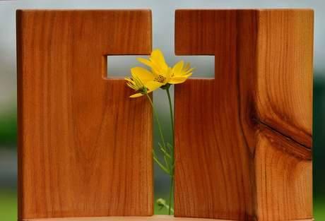 """""""La Cruz es el único """"árbol"""" que ha dado frutos de vida eterna; por eso de Él todos recibimos gracia tras gracia."""""""